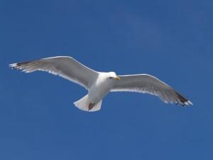 J.L. Seagull